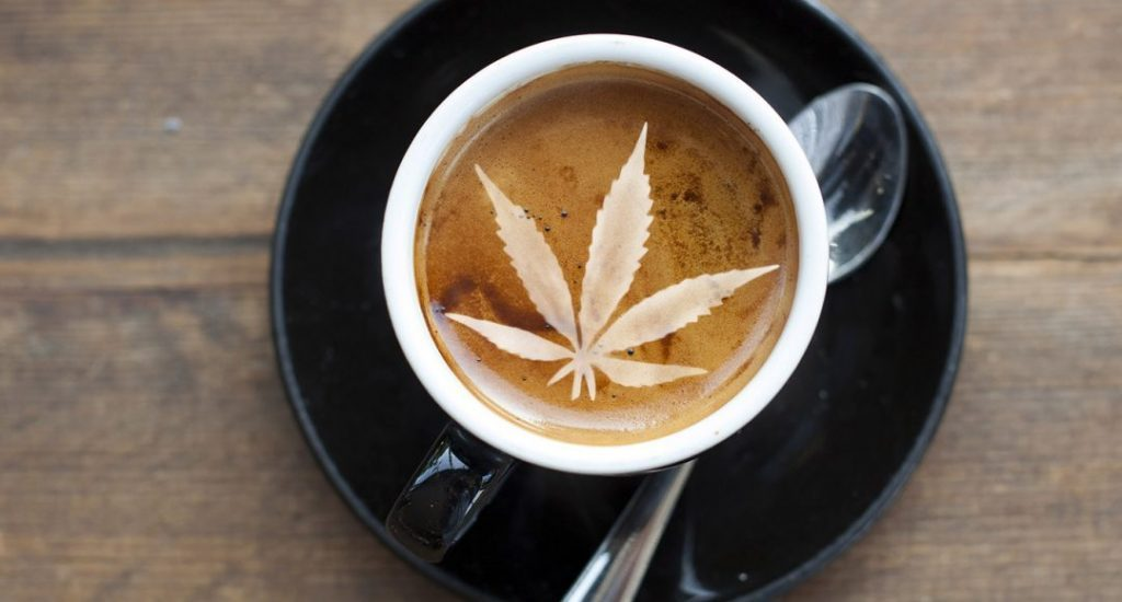 café de cannabis legal sistema cannabinoide