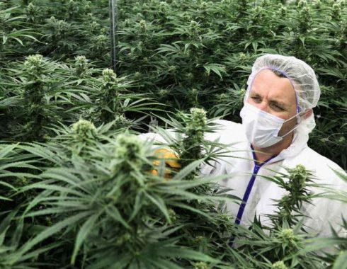Plan de negocios de una empresa de cannabis