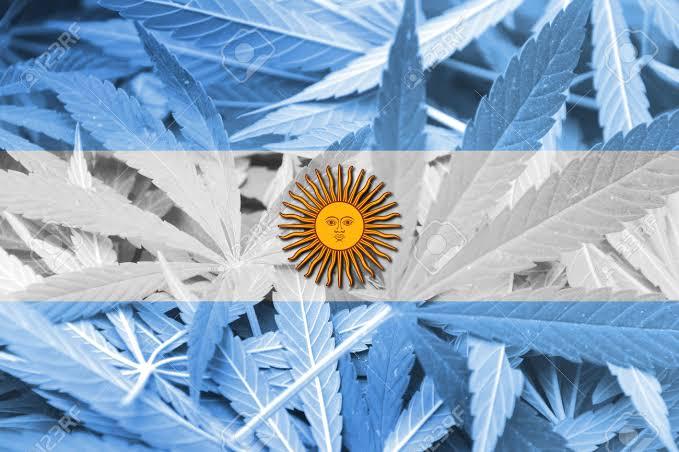 Nación Cannabis | Polémico cierre de Canopy Growth en Argentina