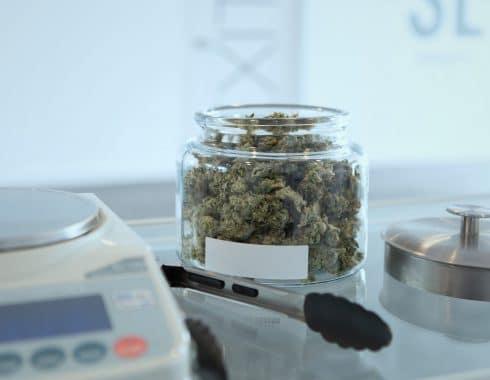 cannabis medicinal paraguay