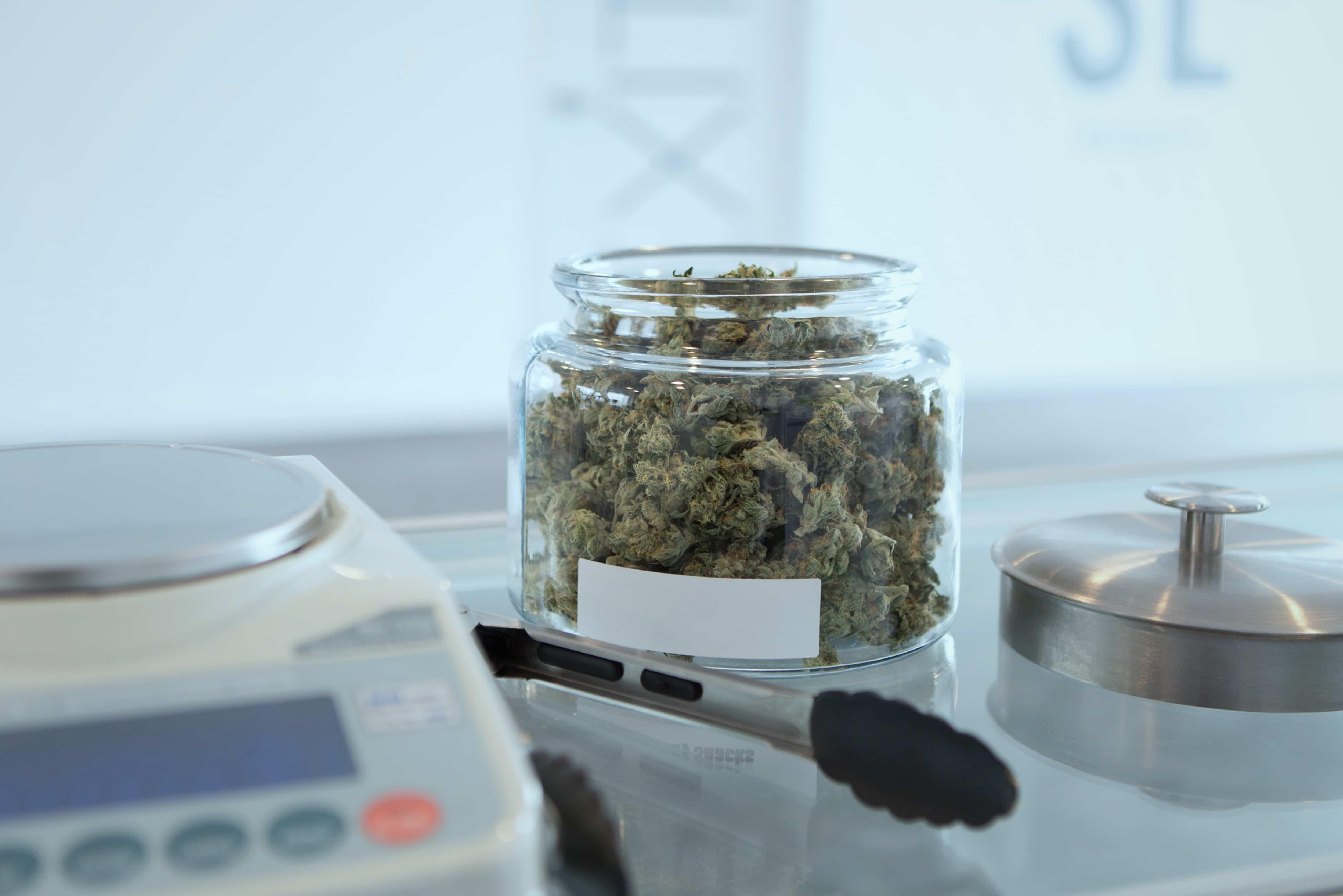 Nación Cannabis | Paraguay exportará cannabis medicinal