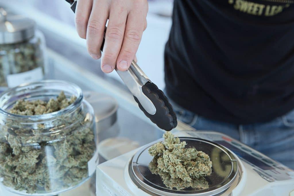 cannabis aceleradora de negocios