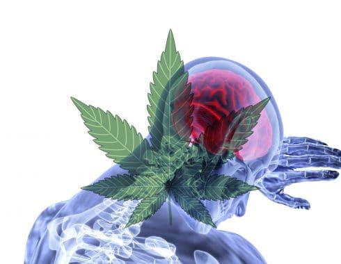 cannabis efecto inflamacion