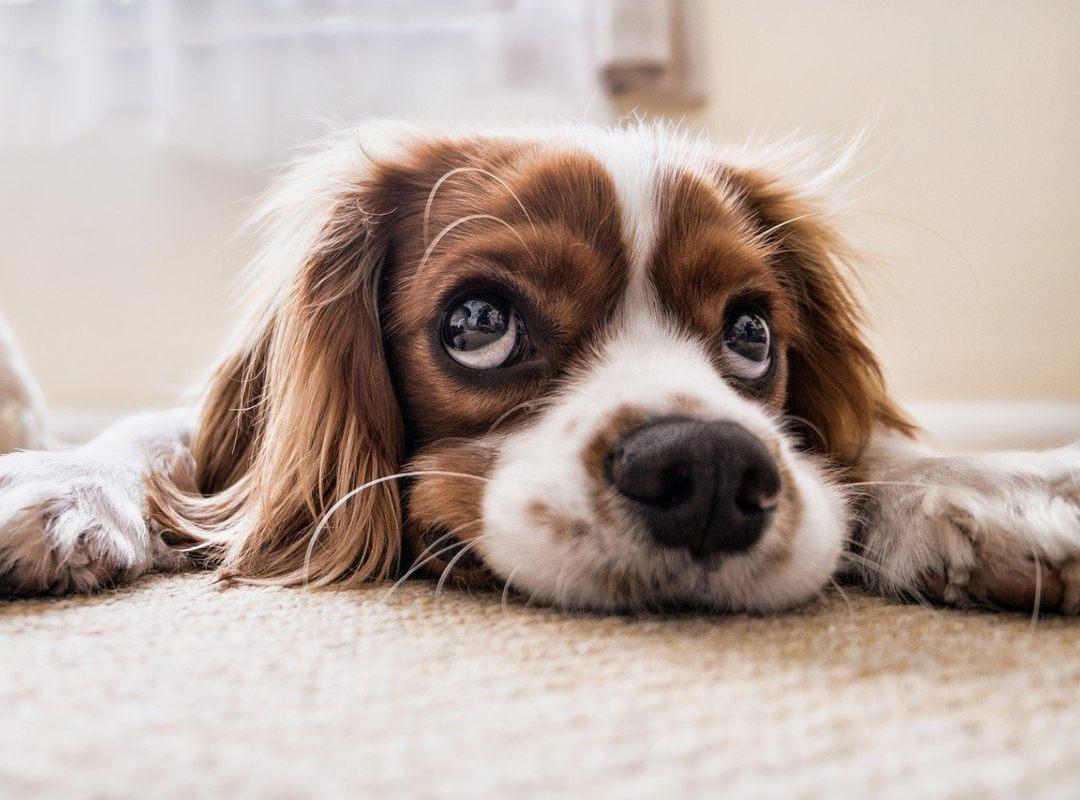 Nación Cannabis | El CBD podría curar el cáncer en perros