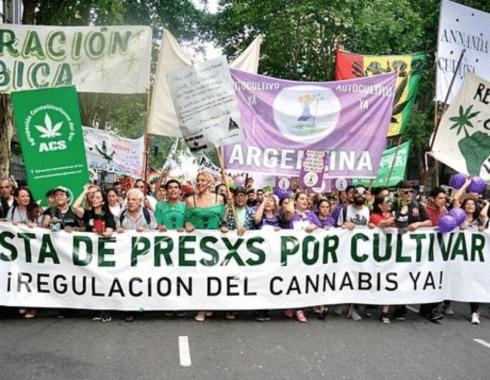 regulacion cannabis argentina