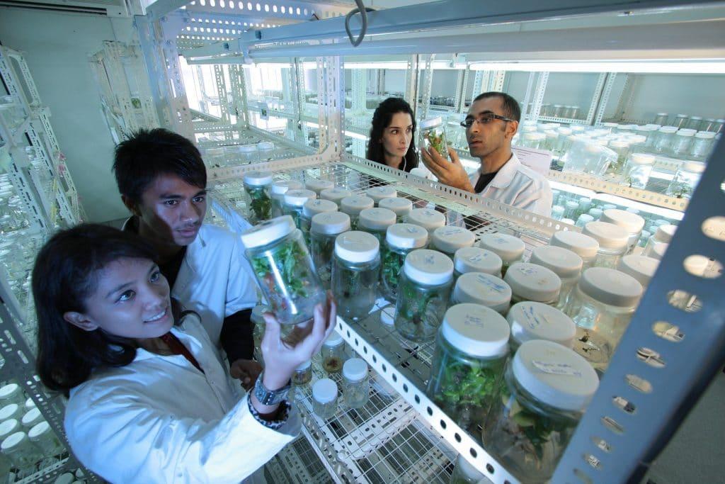 cannabinoides THCP CBDP