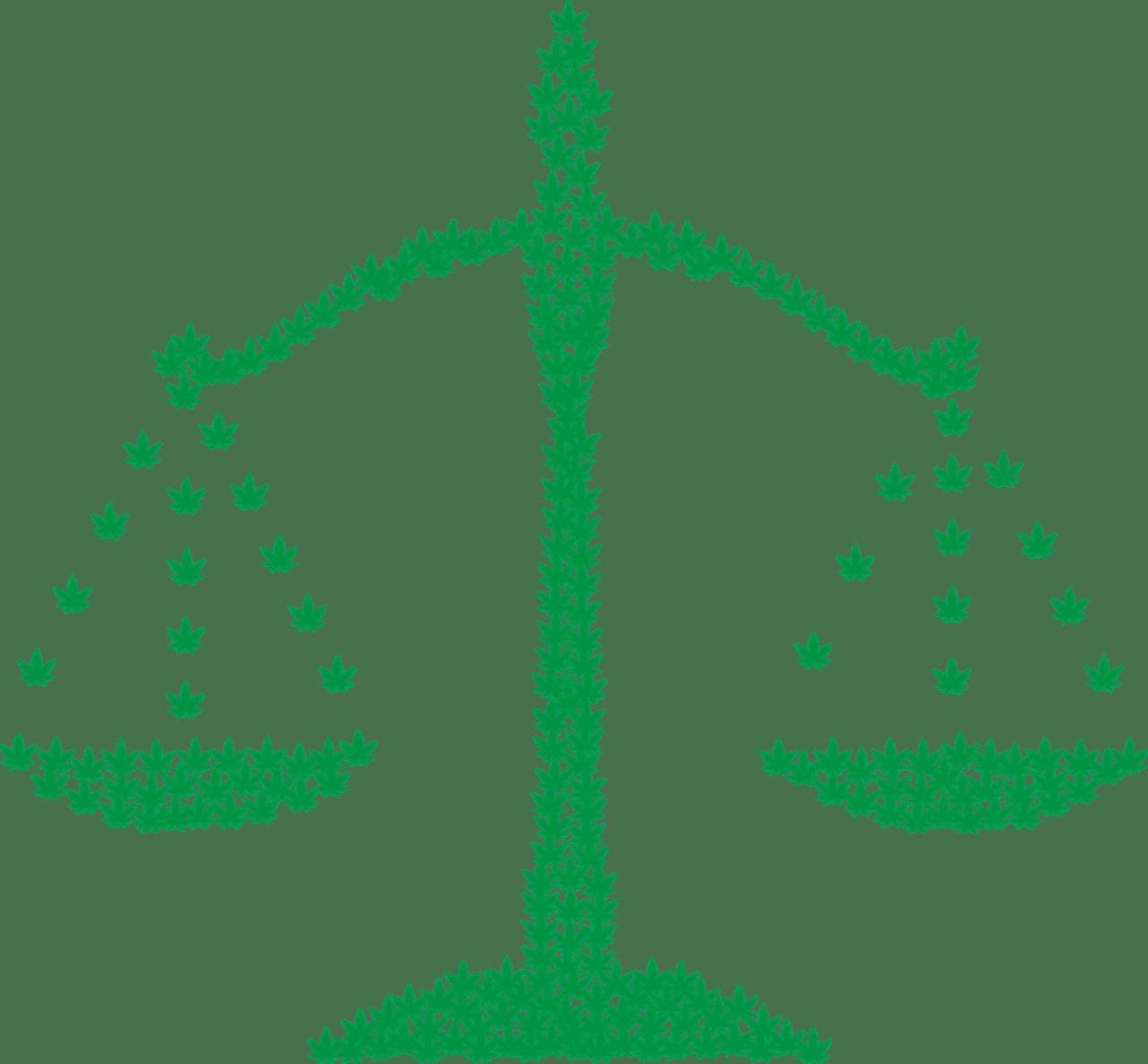 Nación Cannabis | ¿Mexicanos a favor o en contra de la legalización del cannabis?
