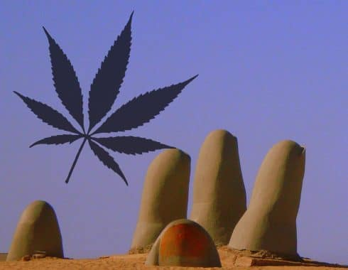 cannabis emprendedores