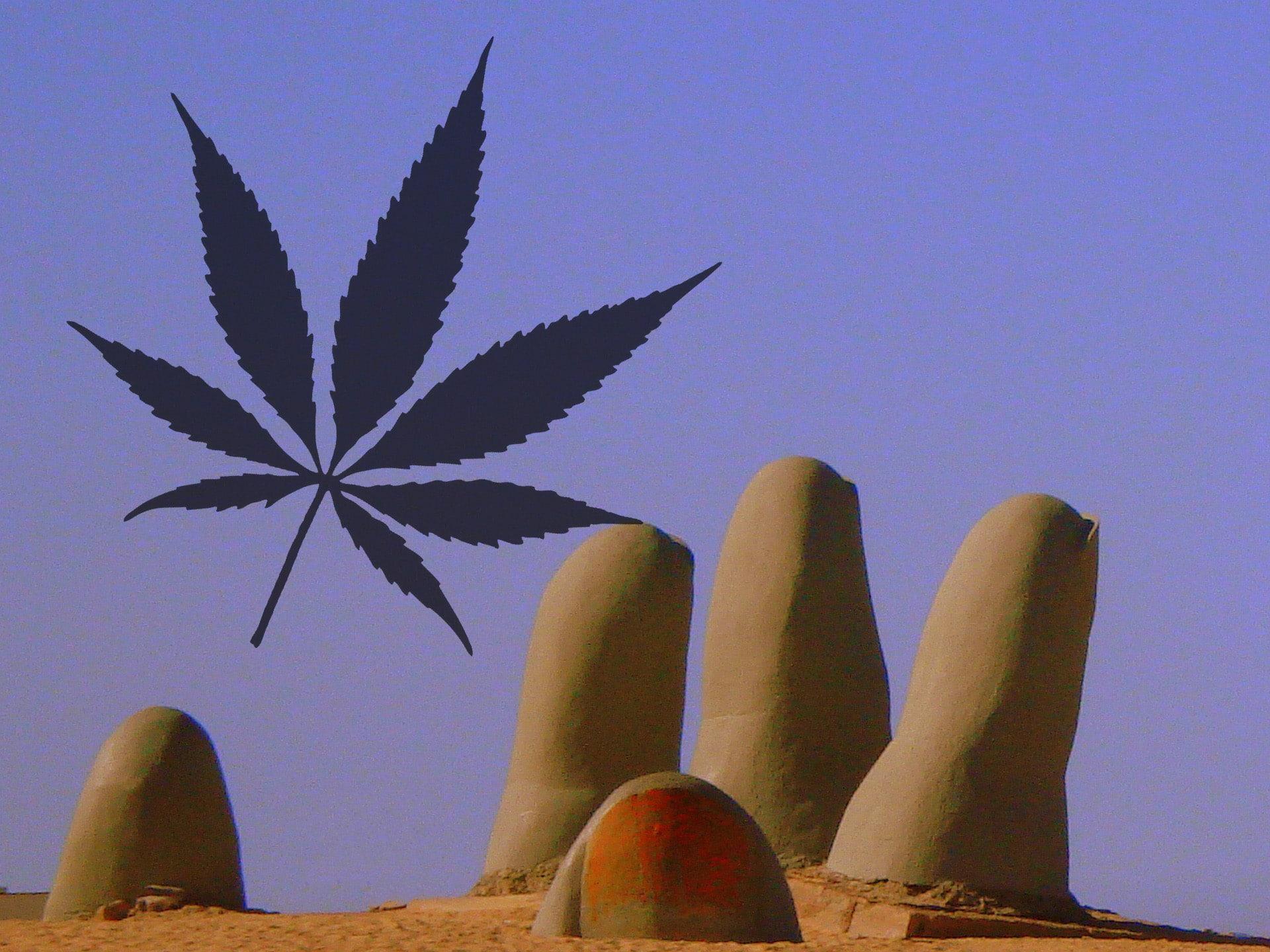 Nación Cannabis | Punta del Este: un paraíso para los emprendedores de la cannabis sativa