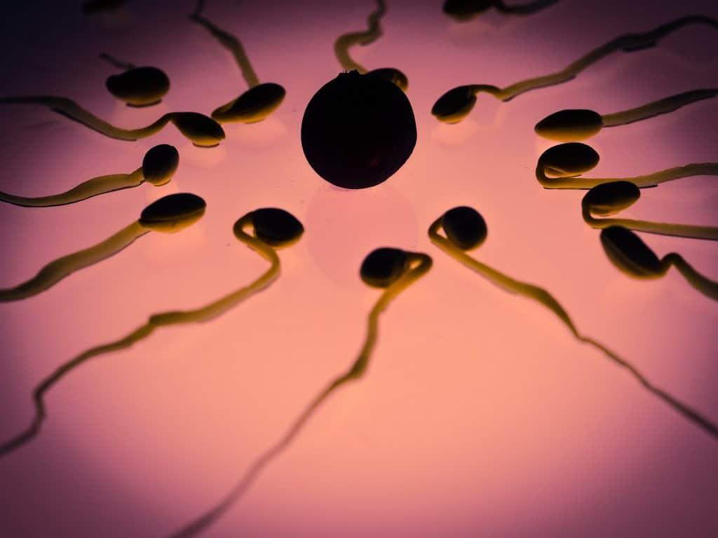 espermatozoides marihuana