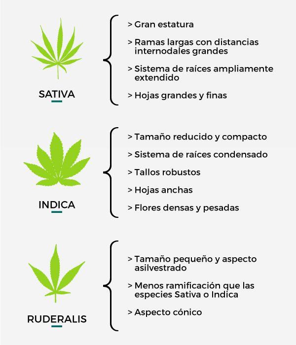 Nación Cannabis