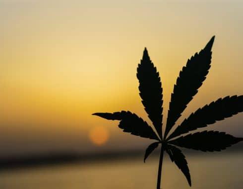 cannabis paraguay