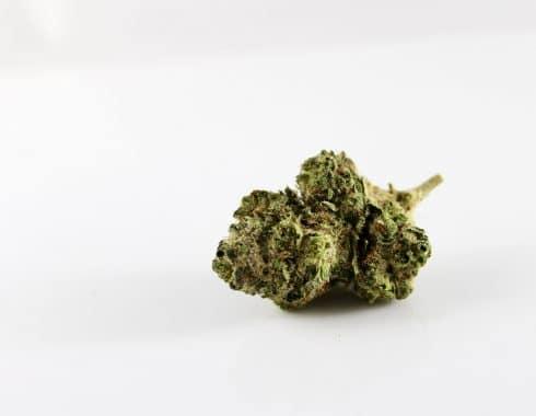 Qué cannabis tiene más CBD