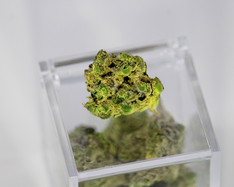 Nación Cannabis | ¿Cuándo cosechar cannabis según la luna?