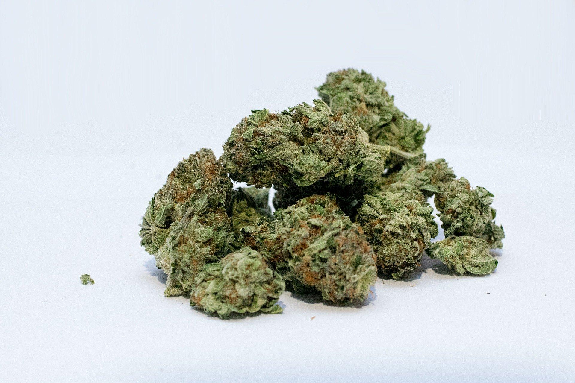 Nación Cannabis | Multas de hasta 3.4 mdp por fumar marihuana en espacios públicos de México
