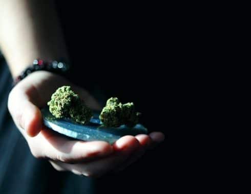 que cannabis es mejor indica o sativa