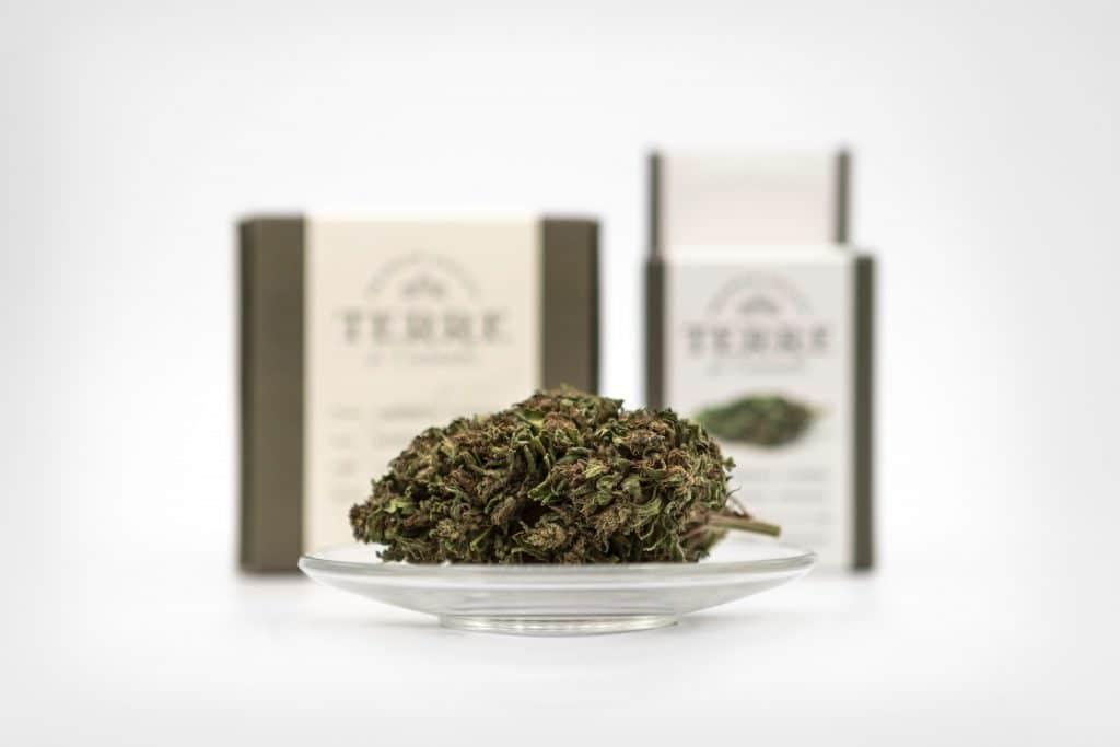 cual cannabis es nedicinal