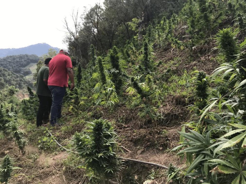 Nación Cannabis | Sierra de Guerrero: un paraíso para el cultivo legal de la marihuana