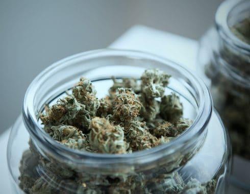 cannabis salvaría a México de la crisis