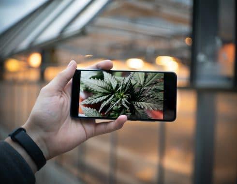 canal tv dedicado cannabis