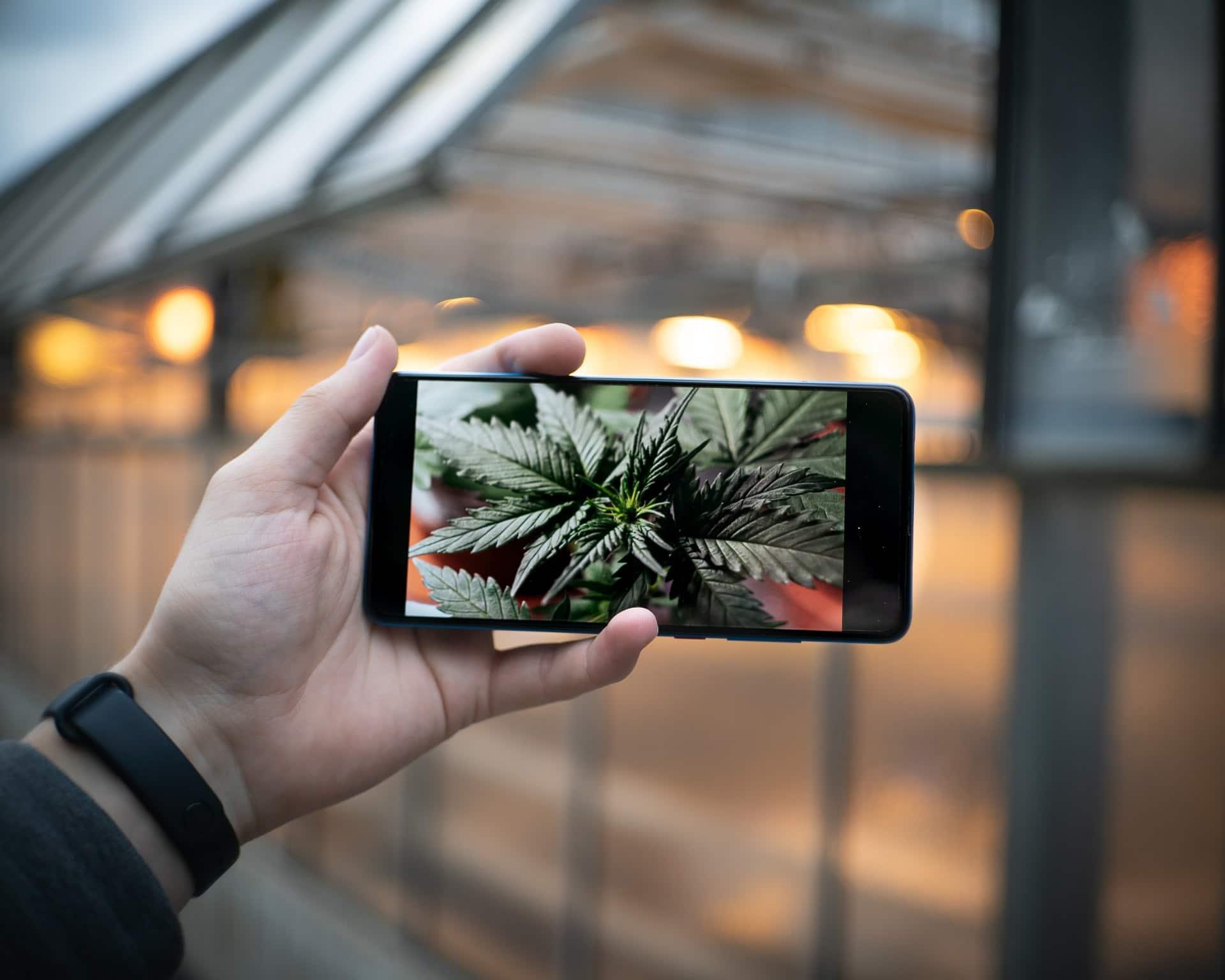 Nación Cannabis | Amazon duda sobre iniciar venta de cannabis