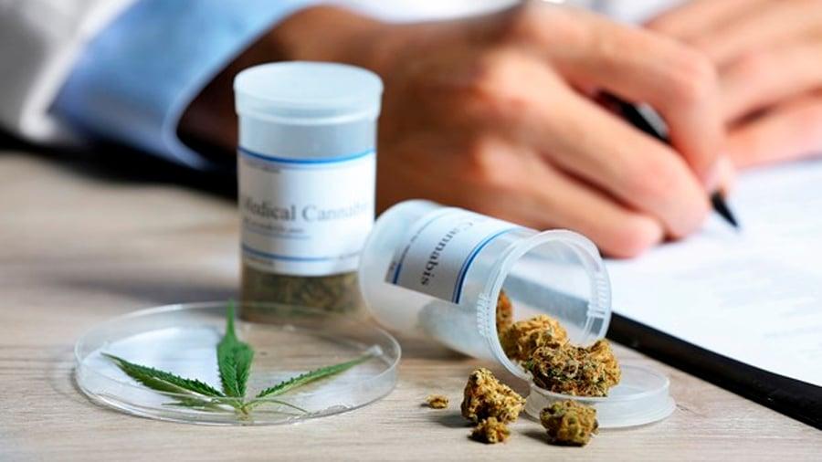Presentan libro sobre usos del cannabis medicinal