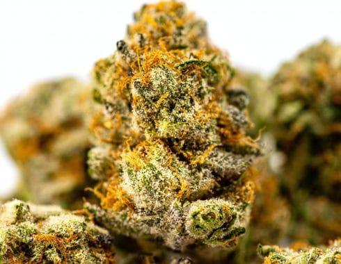 Albania apuesta por legalizar al cannabis medicinal