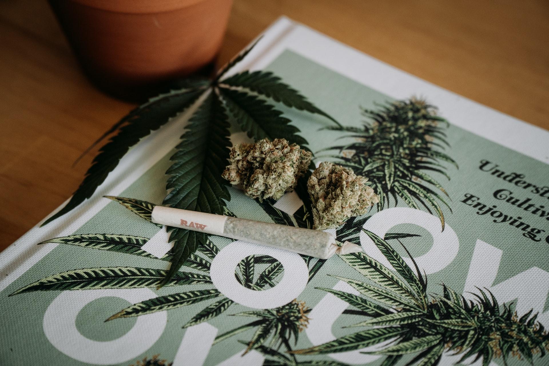 Nación Cannabis | La legalización del cannabis no incrementa el consumo entre adolescentes