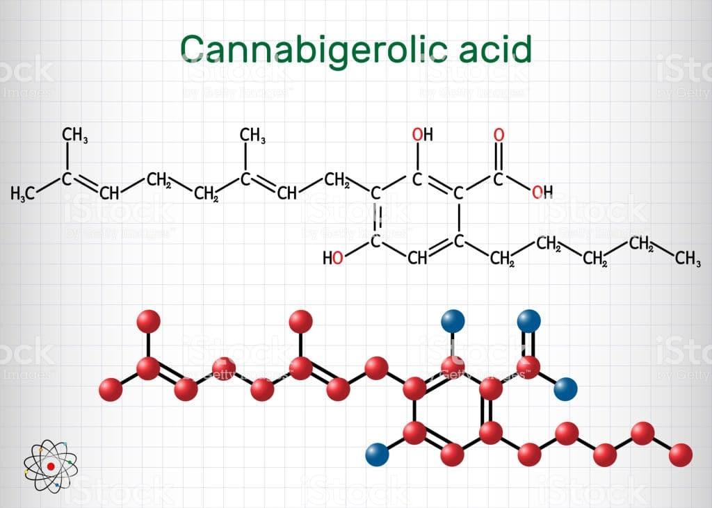 """El CBGA, """"abuelo"""" de los cannabinoides"""
