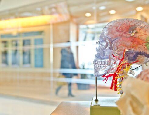 Sistema endocannabinoide y su función en el cuerpo
