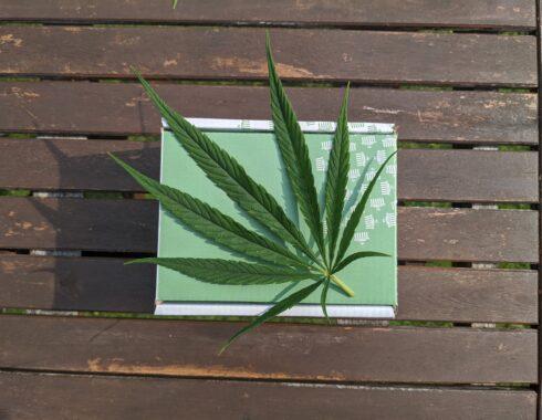 fumar cannabis covid 19 cbd
