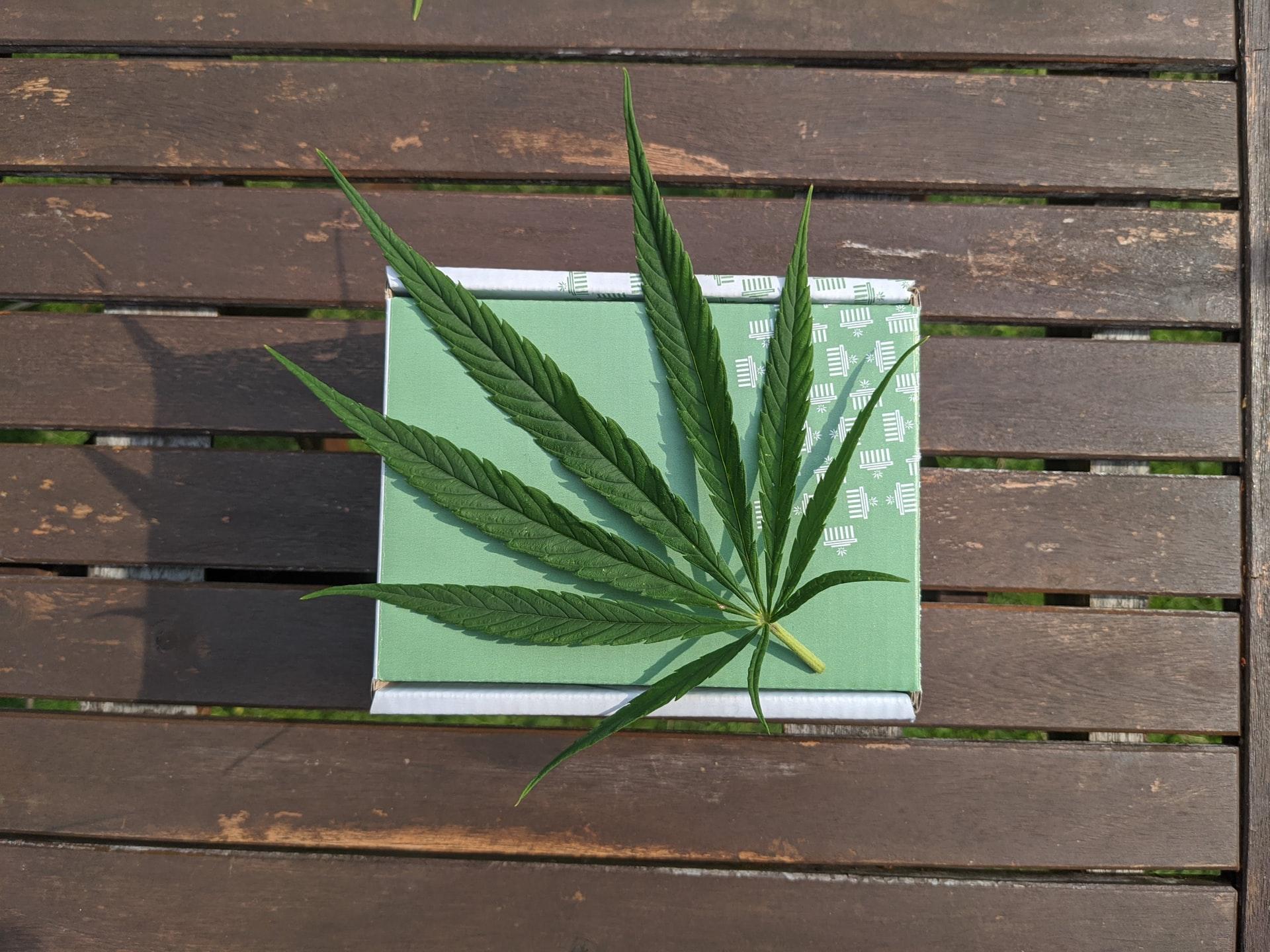 Nación Cannabis | Fumar cannabis te hace vulnerable al COVID-19, pero el CBD lo alivia