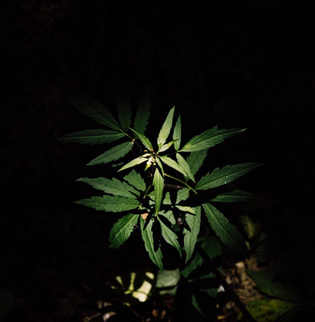 fotosintesis fase oscura