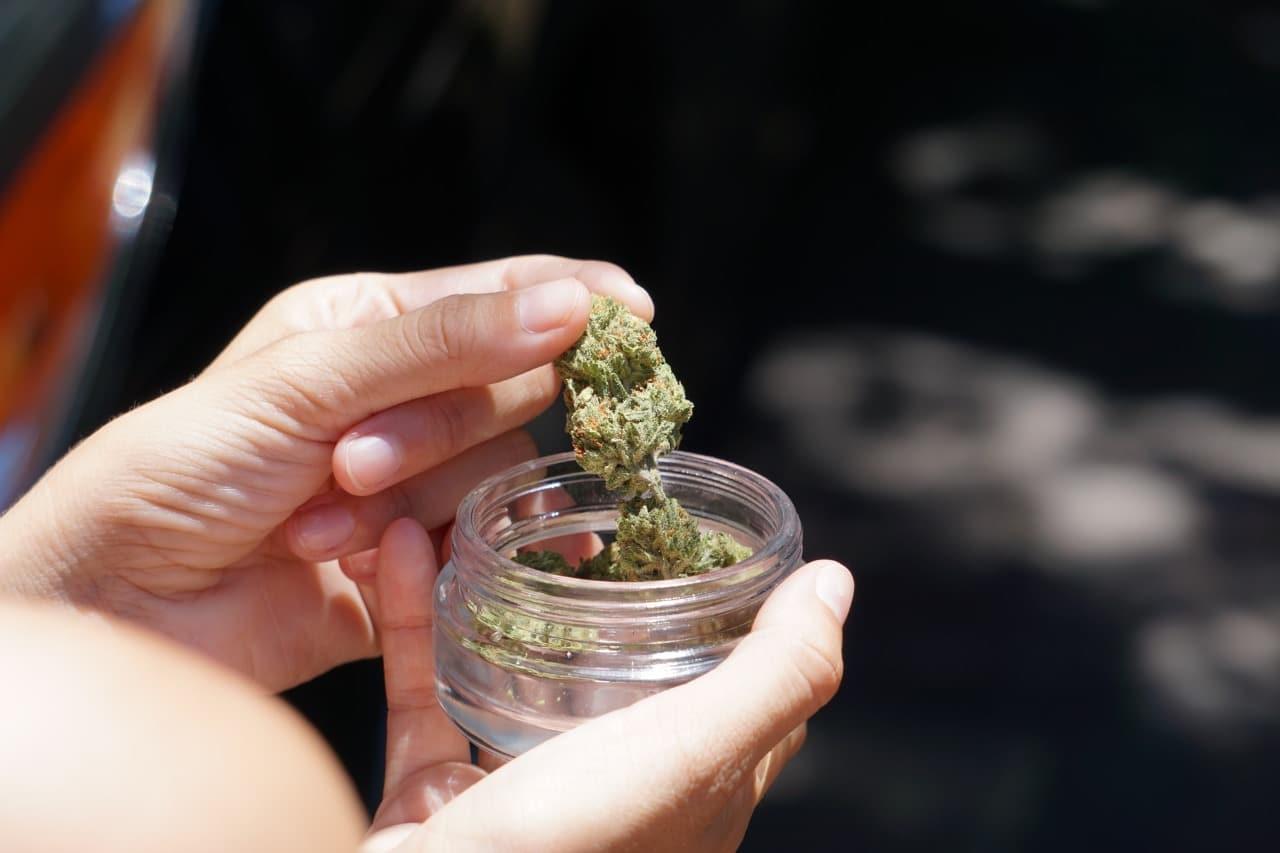 Nación Cannabis | Diferencias entre el cáñamo y la marihuana: cómo elegir la que necesitas