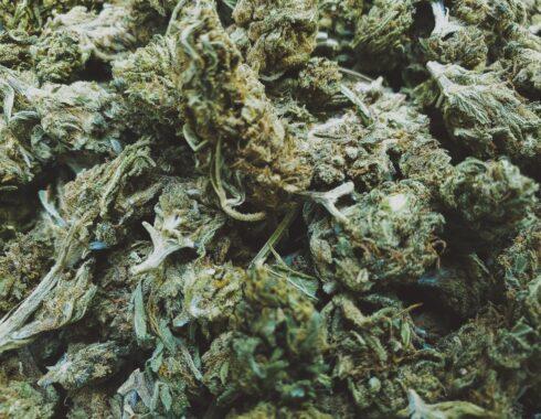 Hash, ¿qué es y en qué se diferencia a la marihuana?