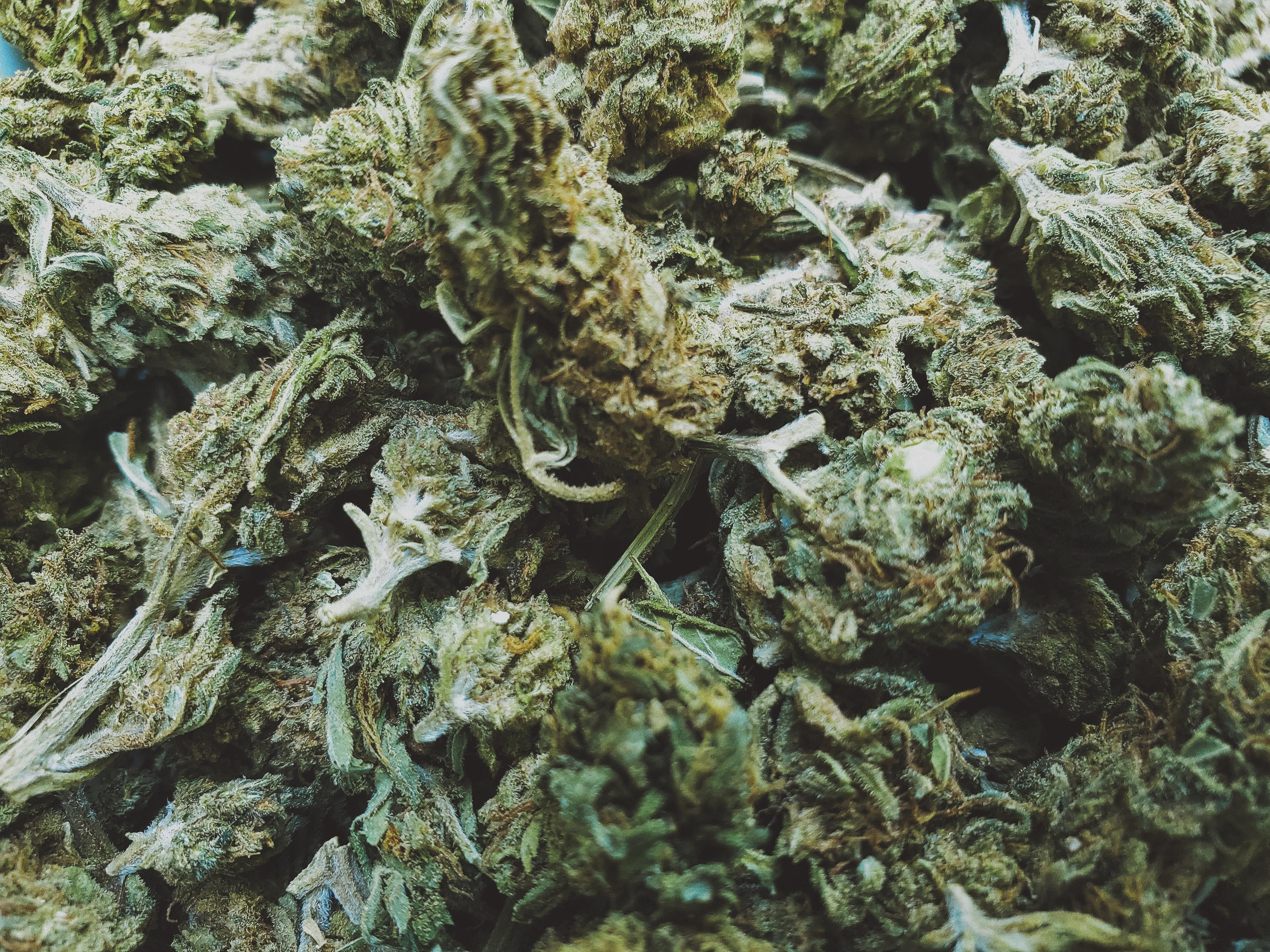 Nación Cannabis | Hash: ¿qué es y en qué se diferencia de la marihuana?