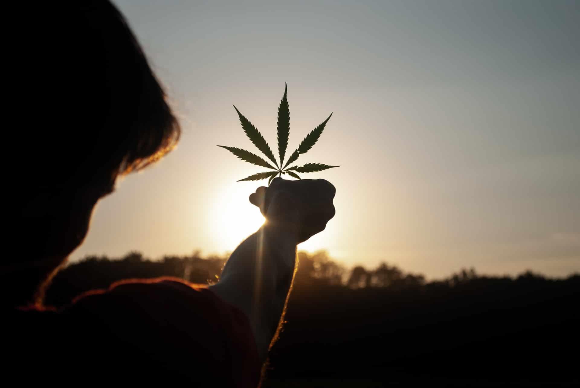 Nación Cannabis | 5 beneficios del cannabis que debes conocer