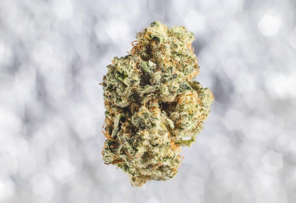 como cultivar marihuana sitios aprender