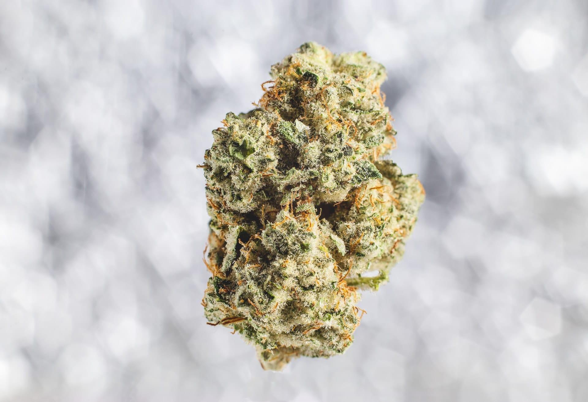 Nación Cannabis | Cómo cultivar marihuana: los mejores sitios para aprender