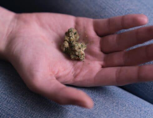 cannabis afecta al sistema inmune