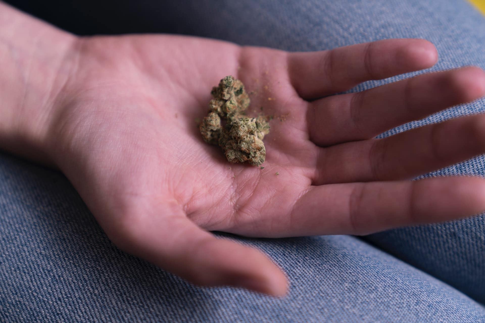 Nación Cannabis | De qué manera el cannabis afecta al sistema inmune