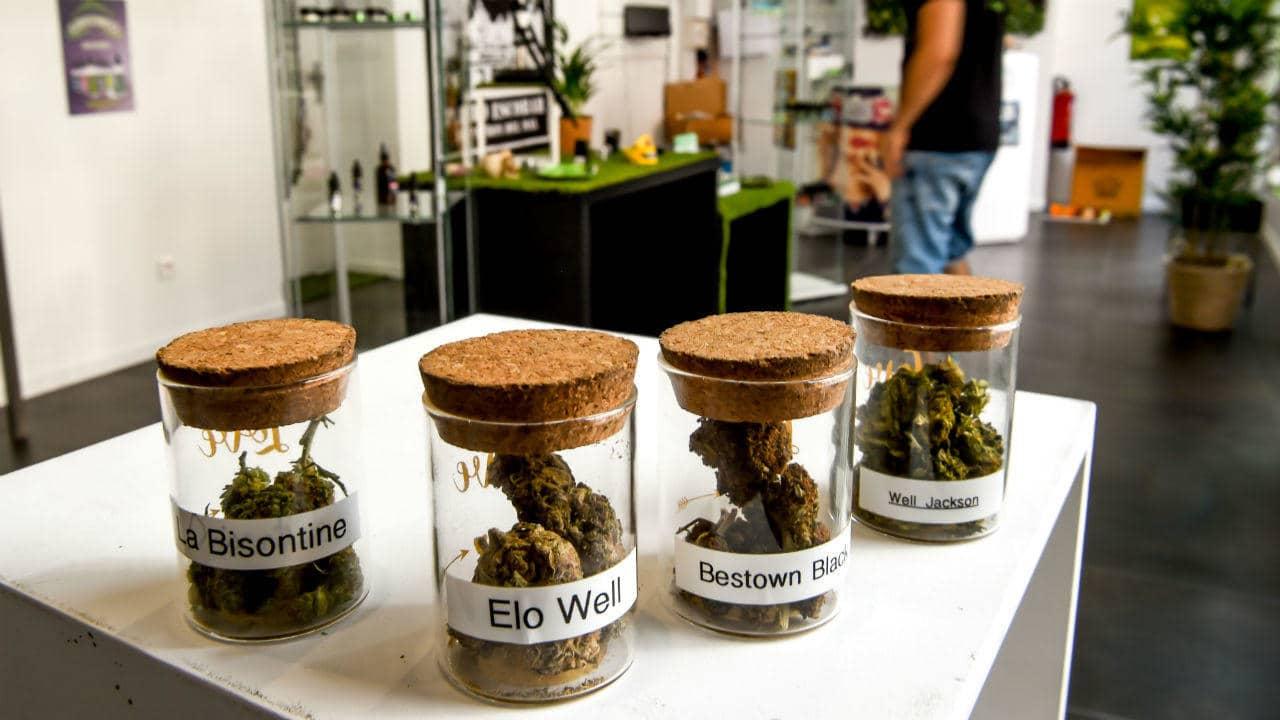 Nación Cannabis | Francia distribuirá cannabis medicinal gratuito