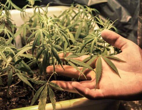 7 razones por las que la marihuana debe ser legal