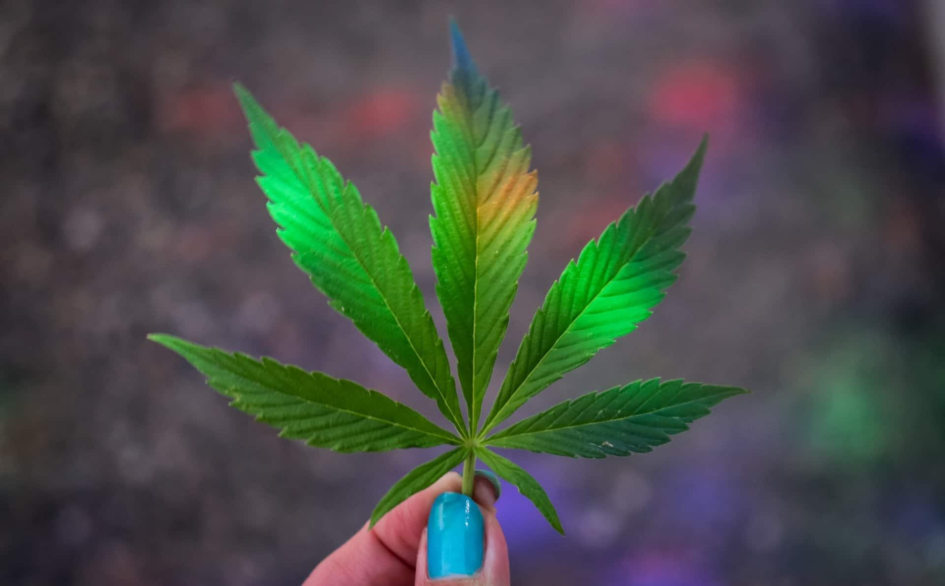 Nación Cannabis | Cannabis: ¿reduce síntomas del TOC?