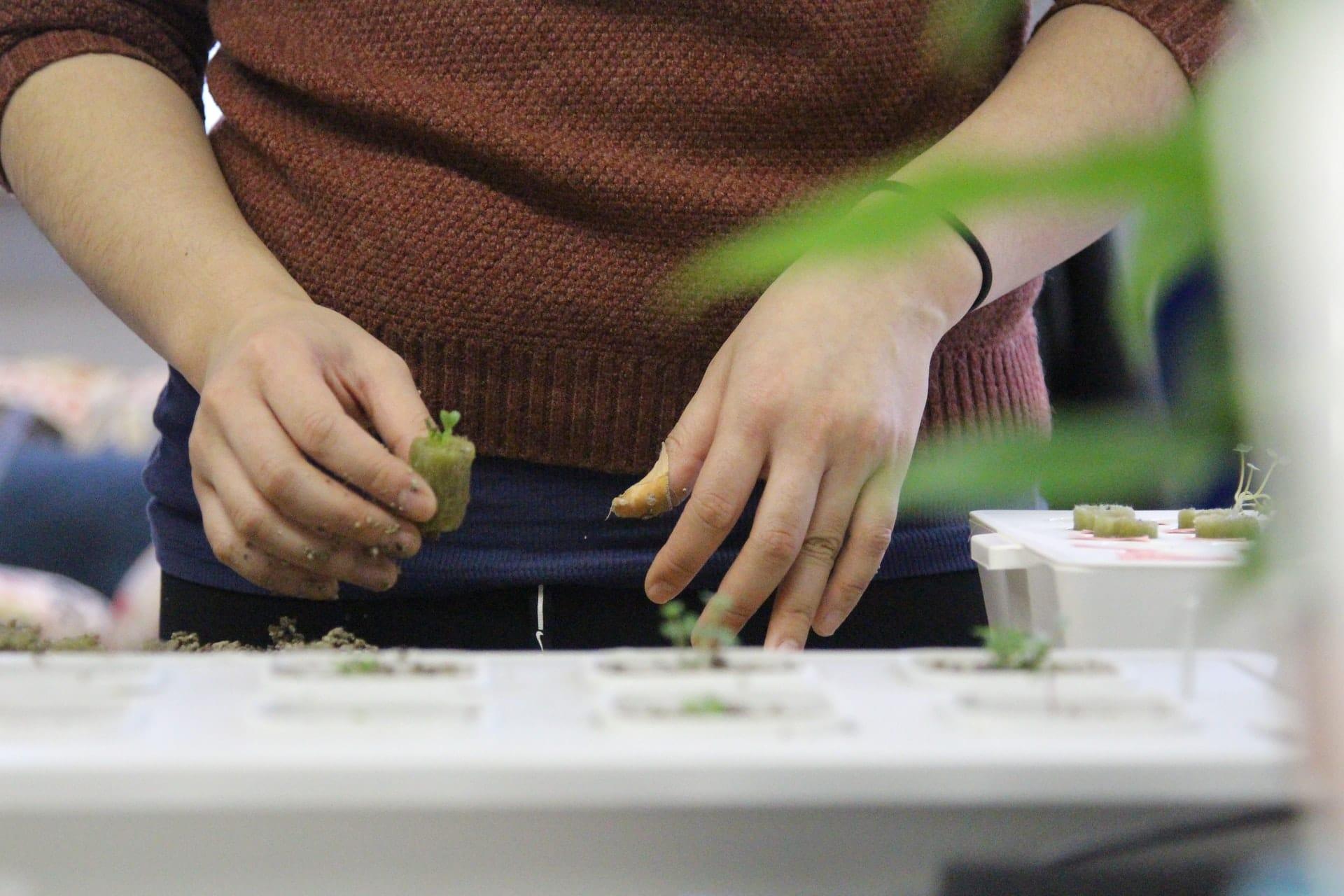Nación Cannabis | ¿Qué es el cannabis hidropónico?