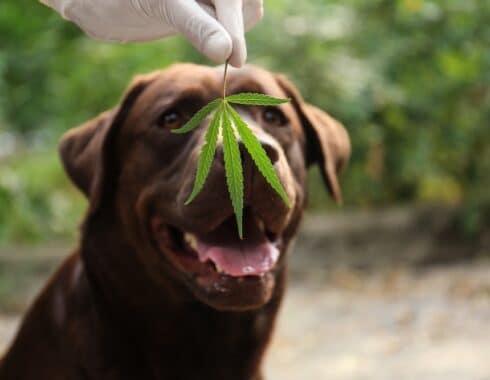 ¡El CBD beneficia a tu perro! Te decimos cómo