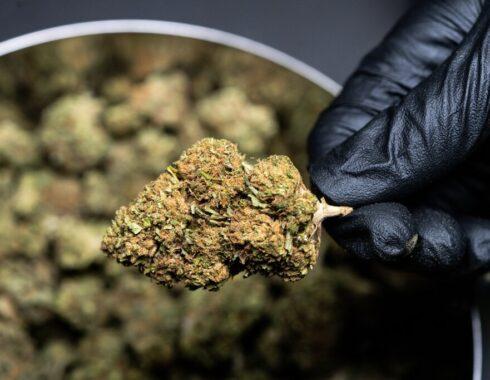 Ley Federal para la Regulación del Cannabis en México