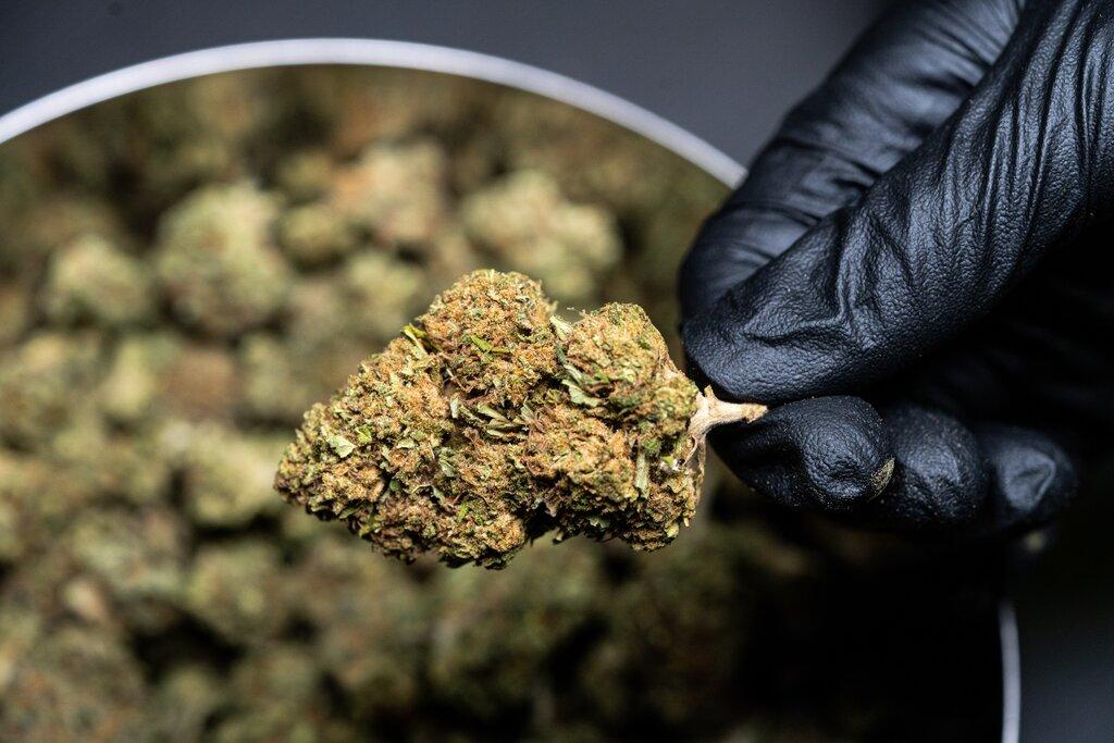 Nación Cannabis | Se aprueba la Ley Para la Regulación del Cannabis en México