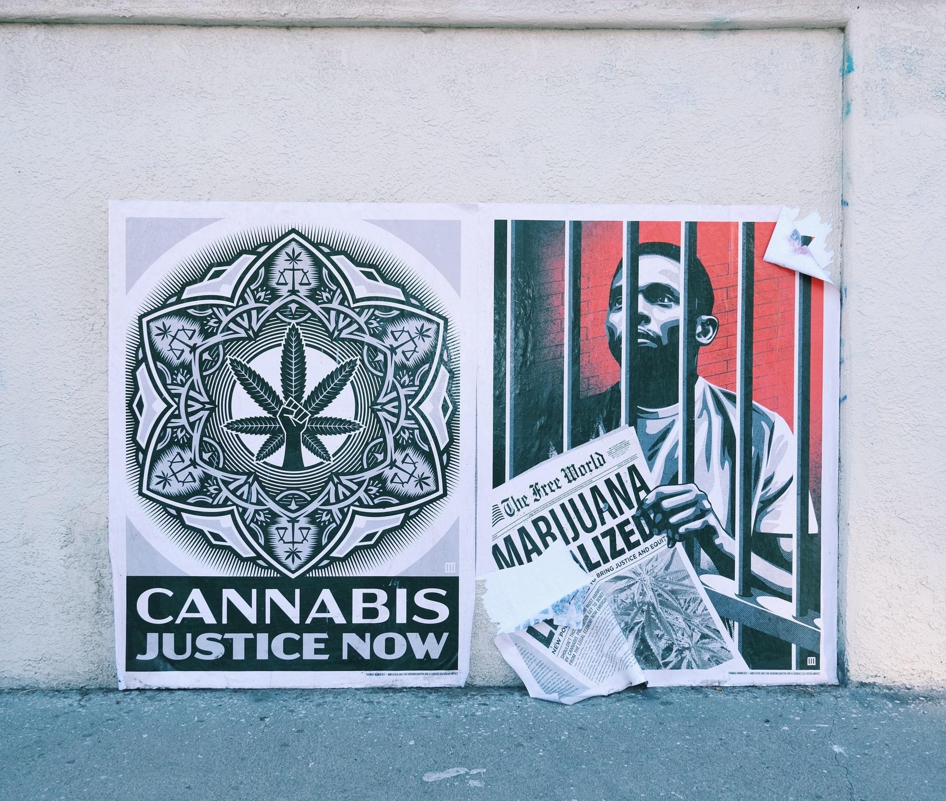 Nación Cannabis | ¿Qué pasará con la industria cannábica de EE. UU. con Biden?