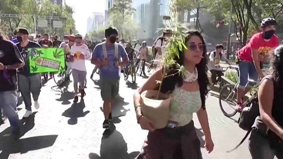 Nación Cannabis | México se alista para regular la marihuana